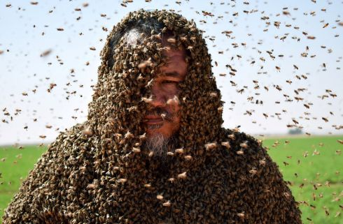 BUSYBODY: A Saudi man poses with his body covered with bees, in Tabuk, Saudi Arabia. Photograph: Mohamed Al Hwaity/Reuters