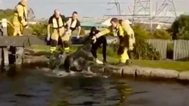 ► VIDEO: Dublin Fire Brigade rescue horse from Grand Canal