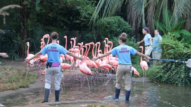 Flamingos are evacuated at Riverbanks Zoo and Garden in South Carolina, US. Photograph: Riverbanks Zoo And Garden/via Reuters