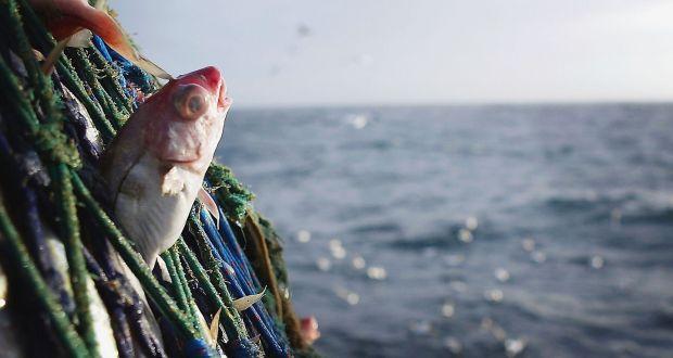Fishing dating ireland