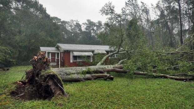 A tree uprooted by Hurricane Florence lies in front of a home in Wilmington, North Carolina, US. Photograph: Jonathan Drake/Reuters