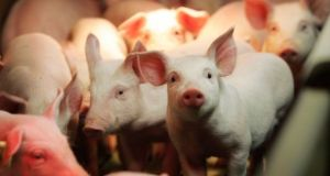 Ireland must ramp up security measures against the spread of a deadly disease threatening pig farmers across Europe, Minister for Agriculture Michael Creed has warned.