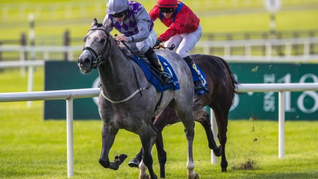 Havana Grey's victory at the Curragh gave Karl Burke a second Group One success of the weekend. Photograph: Bryan Keane/Inpho
