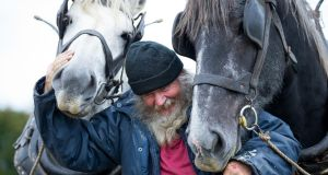 "MY LOVELY HORSES: During day one of the National Ploughing Championships, Gerry Dennehy from Tralee, Co Kerry is seen with his horses ""Mutt ""and ""Jeff "". Photograph: Tom Honan"