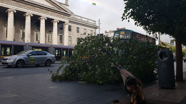 A fallen tree on O'Connell Street, Dublin, Wednesday morning. Photograph: Éanna Ó Caollaí