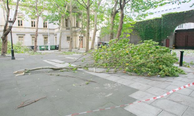 Large trees which fell due to Storm Ali beside the National Museum of Ireland on Kildare Street, Dublin. Photograph: Gareth Chaney/Collins