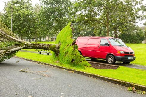 A tree uprooted in Maugheraboy Estate in Sligo as a result of Storm Ali. Photograph: James Connolly