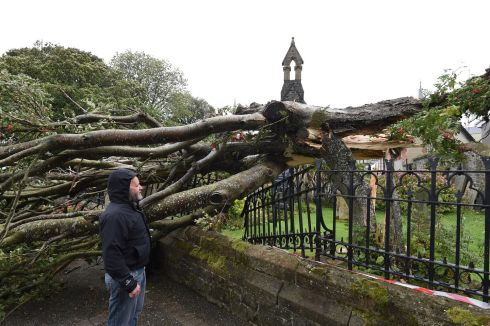 One of the ancient trees at St Augustine's Church in Derry which broke and fell on to the walls. Photograph: Trevor McBride