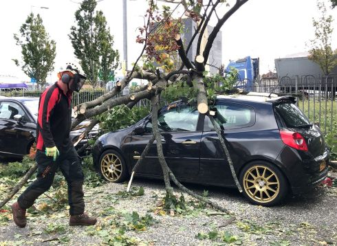 A tree which fell onto a car in Belfast as Storm Ali made itself felt. Photograph: Liam McBurney/PA Wire