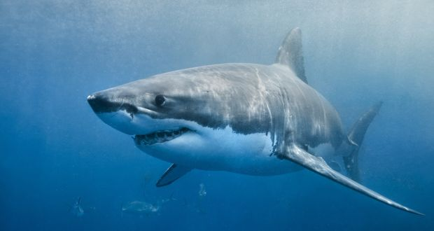 girl and woman critical following two shark attacks in australia