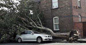 A large tree felled by Storm Ali on Cambridge Road, Ringsend in Dublin 4. Photograph: Collins