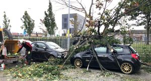 A tree which fell onto a car in Belfast during Storm Ali. Photograph: PA