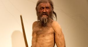A reconstruction of Ötzi the iceman, the 50,000-year-old European found in the Italian alps in 1991. Photograph: Thilo Parg