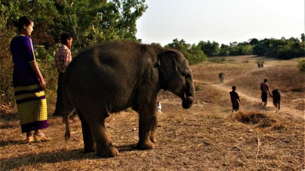 Orphaned elephants and their oozies set out for an evening walk. Photograph: Stephen Starr.