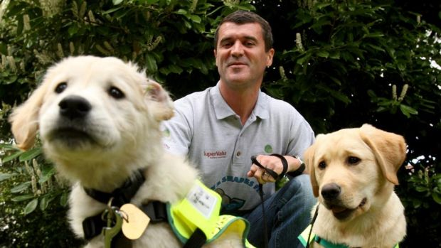 Faithful friend: Roy Keane with guide-dog puppies Verna and Tonie in 2010. Photograph: James Crombie/Inpho