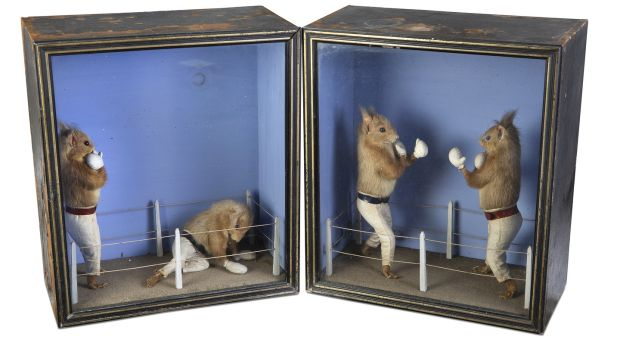 Boxing squirrels taxidermy (Lot 65, €3,000 - €5,000)