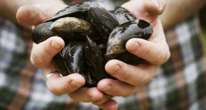 The Killorglin-based company cultivates mussels in Castlemaine harbour.