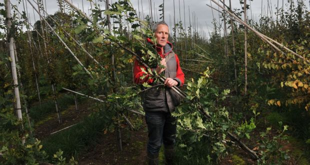 Joe Ahern Owner Fána Tree Nursery Ballyhooly North Cork Surveys The Damage