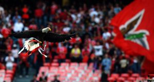 Vitoria, Benfica's mascot, a North American bald eagle flies around the stadium before a   Champions League match. Photograph:  Paul Ellis/AFP/GettyImages