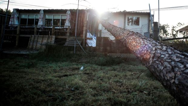 A damaged house is pictured after a tree fell on during storm Leslie in Figueira da Foz. Photograph: Getty