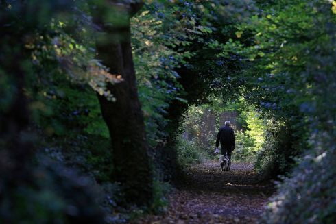 WALKIN THE DOG: A walker and his dog in the Phoenix Park on the afternoon of October 16th. Photograph: Nick Bradshaw/The Irish Times