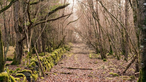 Nature lovers will relish everything Portumna Forest Park in Co Galway has to offer. Photograph: Getty Images