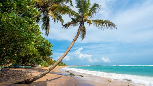 Tropical beach at Mirissa, Sri Lanka. Photograph: Getty Images