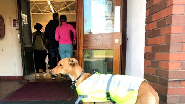A dog waits for it's owner as he votes in the Irish presidential election at a polling station in St Joseph's School, Dublin. Photograph: Cate McCurry/PA Wire