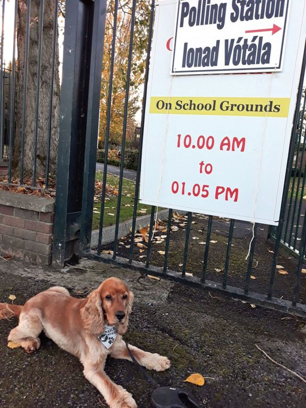 Bernard Harbor's dog Hugo waiting outside a polling station. Photograph: Bernard Harbor/PA Wire