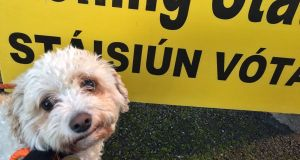 Siobhan Quill's dog Buffy waits outside a polling station in Ireland. Photograph: Siobhan Quill/PA