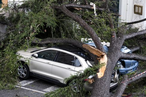 WIND DOWN: A view of a fallen tree over parked cars after strong winds hit Rome, Italy. Photograph: Angelo Carconi/EPA