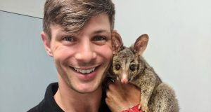 Oisín Tracey at the Native Animal Rescue AU, a wildlife rehab centre in Perth, with Monty the possum who was admitted with corneal ulcers. Photograph: @pawsomedoctor/Instagram