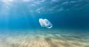 A plastic bag drifts in the ocean as a result of human pollution. Photograph: Getty Images