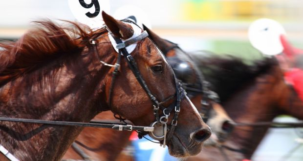 Irish scientists pinpoint what makes thoroughbred racehorses go faster