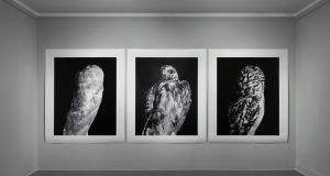 The Augurs I, II and III, by Martin Healy. Image courtesy Butler Gallery, installation photography by Roland Paschhoff