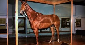 Phar Lap's hide was preserved by a taxidermist and is now exhibited in the Melbourne Museum