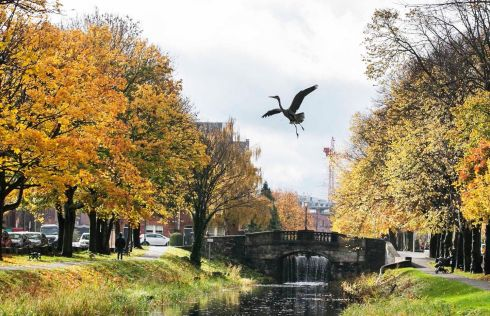 A BEAUTIFUL DAY: A grey heron takes flight along the Grand Canal in Dublin. Photograph: Sam Boal/RollingNews.ie