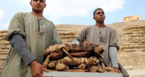 Workers carry mummified cats at the Saqqara area in  Egypt. Photograph: Mohamed Abd El Ghany/Reuters