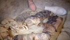 Dozens of cat mummies discovered in Egypt