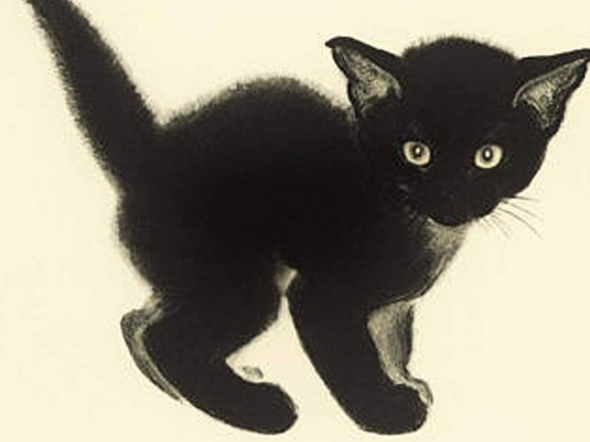 If Cats Disappeared From the World review: Japanese magic