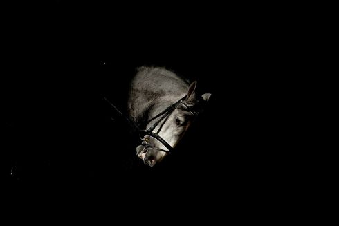 The head of a horse looms into shot during the SICAB Equestrian Trade Show taking place at the Convention Centre of Seville, southern Spain. Photograph: Raul Caro/EPA