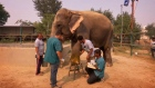 India's first elephant hospital opens for business