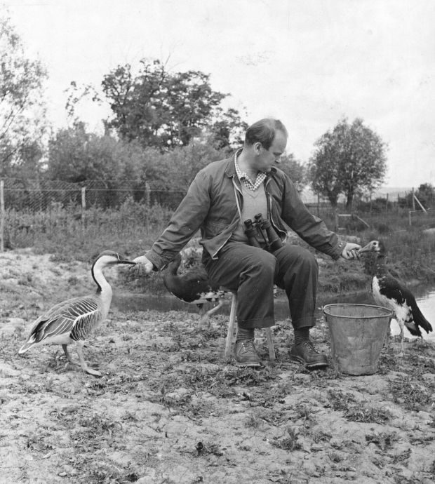 Sir Peter Scott, founder of both the World Wildlife Fund and the British Wildfowl and Wetlands Trust, was an avid hunter. Photograph: Hulton-Deutsch Collection/Corbis/Getty