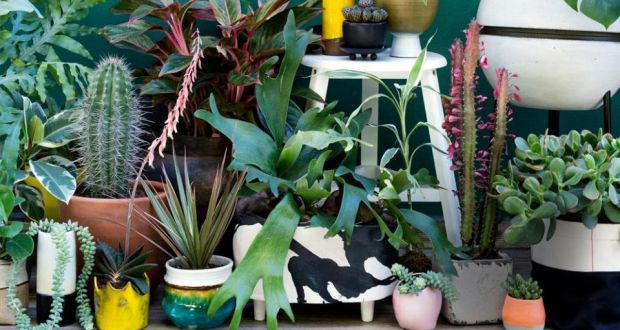 It S The Seventies All Over Again As Houseplants Grow On Us