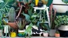 House plants decoratively displayed are a favourite with Instagrammers