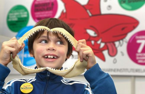 JAWS: MacDara Flavin (8) of Barna, Galway, with a set of teeth from a blue shark at the Marine Institute's display at the Galway Science and Technology Festival at NUI Galway on Sunday. Photograph: Joe O'Shaughnessy
