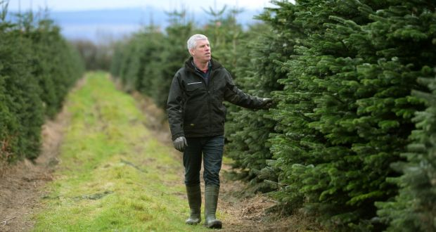 Cut Your Own Christmas Tree.The Farms That Let You Choose And Cut Your Own Christmas Tree