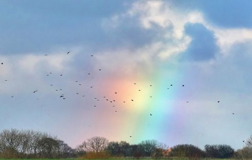 Birds fly through a small rainbow in Whitley Bay, North Tyneside, England. Photograph: Owen Humphreys/PA Wire