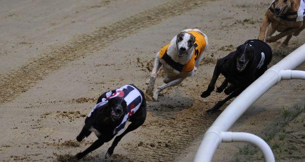 Friday dog racing betting football betting forum nfl