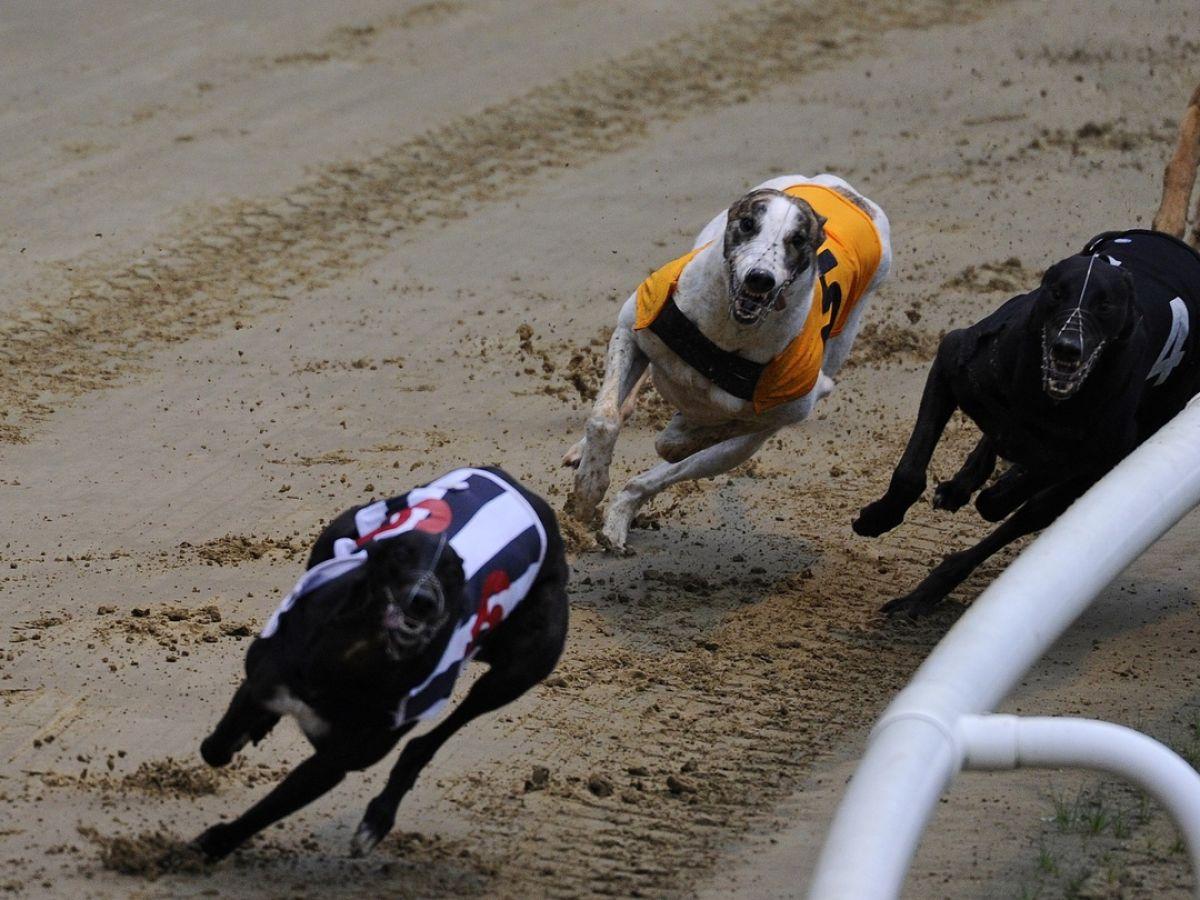 Irish greyhound derby betting 2021 ford nfl betting odds week 6